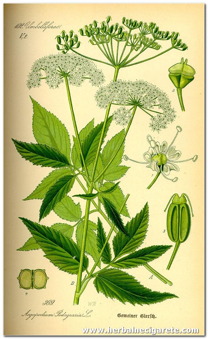 herbalne cigare sastav- javani1
