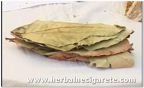 Tendu list sastojak herbalne cigarete